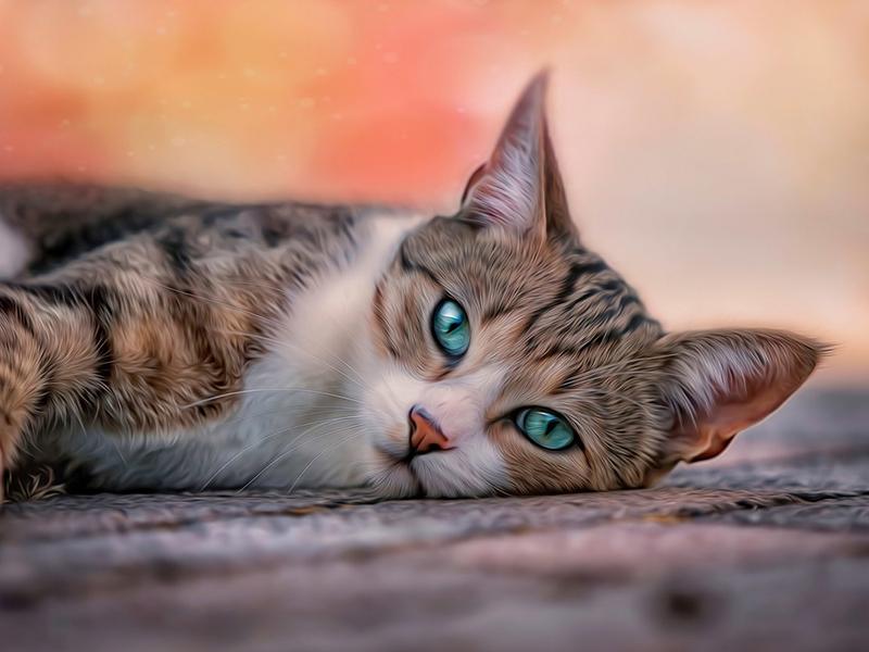 16 любопытных фактов о котах