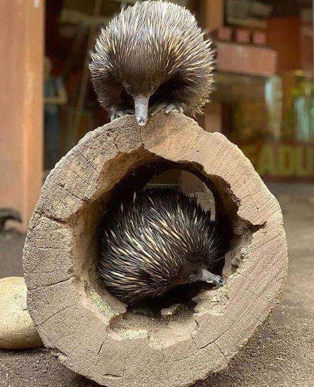 22 удивительных фото из Австралии