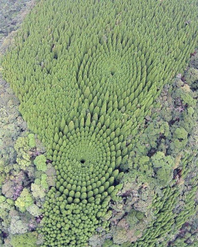 Экспериментальный лес в Японии хозяйства, шагом, радиальным, градусов, сформировать, чтобы, деревья, посадили, достижения, годуДля, этого, эффекта, исследователи, концентрических, кругов, копия, югеЯпонииЭто, статьи, находящейся, httpsmasterokblogrup33828