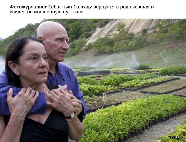 Супруги высадили более 2 миллионов деревьев, превратив пустошь в тропический рай (9 фото)