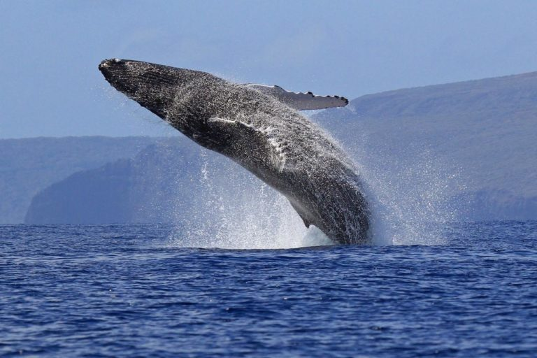 Топ 10 самых тяжелых животных в мире