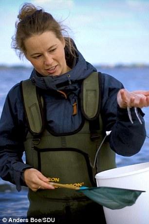 Гастрофизики придумали новый способ приготовления чипсов из медуз ❘ фото