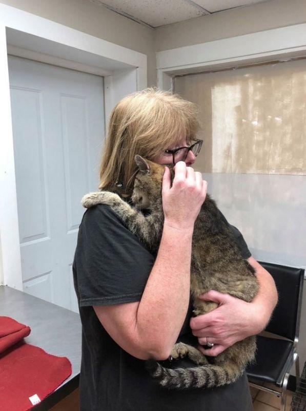Кот вернулся домой через 11 лет (3 фото)