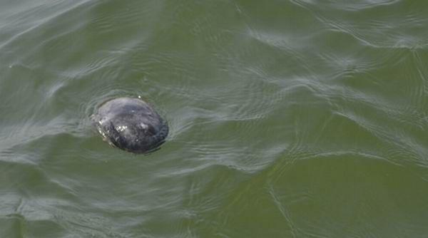 Морские губки атакуют США (6 фотографий)
