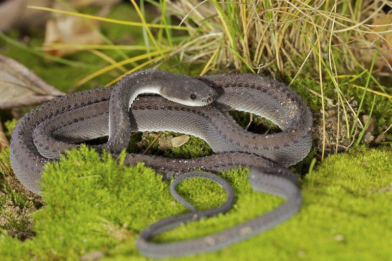 10 самых странных рептилий нашей планеты