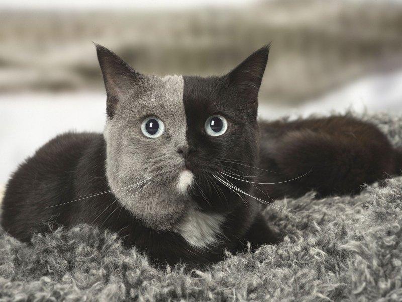 Самые нелепые законы о кошках (15 законов)