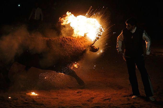 Испанское развлечение - Toro de Jubilo (8 фото)