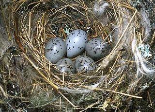 От чего зависит цвет птичьих яиц? (3 фото)