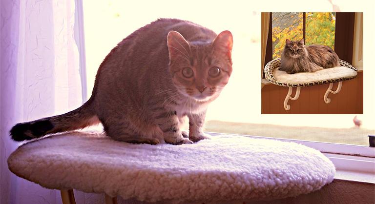 ТОП-10 прикольных вещей для здоровья вашего кота (10 фото)