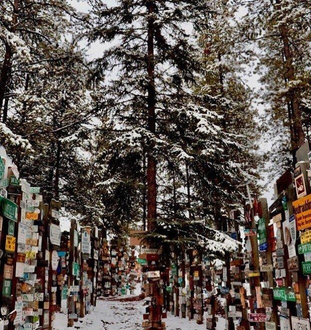 90 000 дорожных указателей в одном канадском лесу (6 фото)