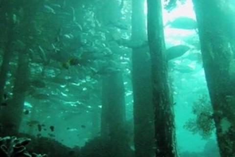 Под водой нашли лес возрастом 60 тысяч лет