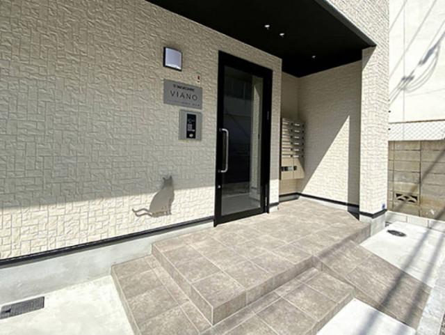 Необычный жилой дом в Японии, спроектированный для одиноких жильцов с кошками
