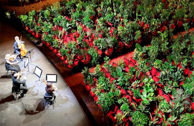 В Барселонском оперном театре дали первый посткарантинный концерт для... 2292 растений (7 фото)