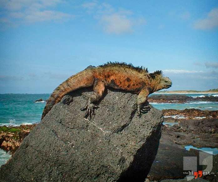 Острова, на которых обитают уникальные животные