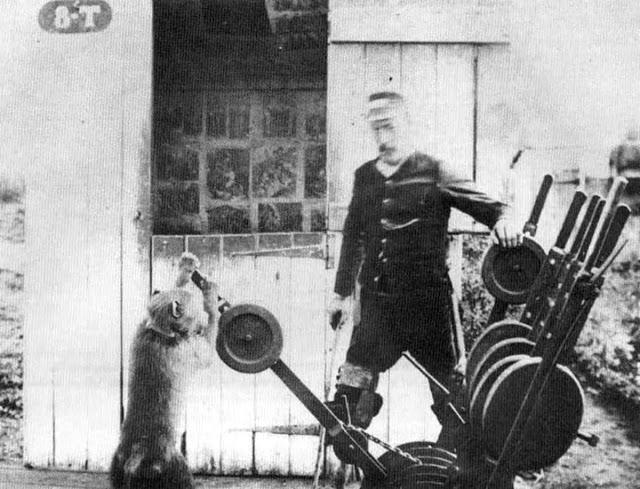 Джек Бабуин, который работал железнодорожным связистом в 1880-х годах за деньги и пиво и никогда не ошибался!