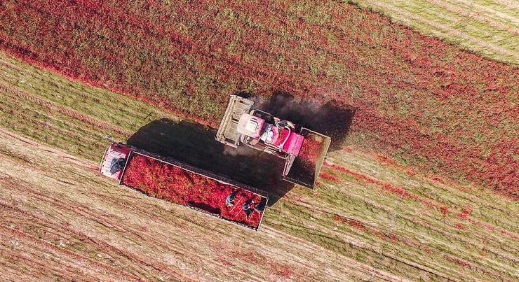 Впечатляющие кадры: поля перца чили в Китае (8 фото)