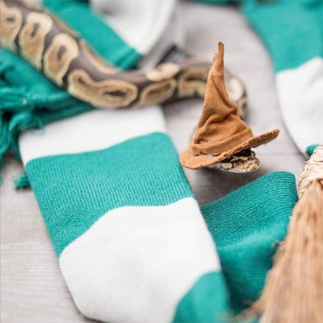 Существует сообщество, созданное для людей, которым нравится делать шляпки для змей (21 фото)