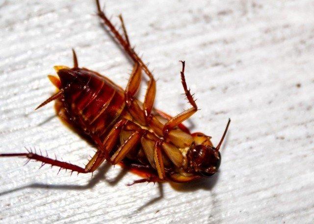 Зачем нужны тараканы в природе?