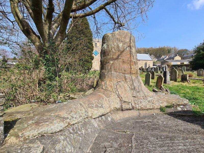 Ископаемое дерево Стэнхоуп в Англии