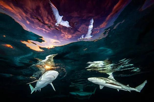 15 завораживающих снимков, победивших в конкурсе Подводной фотографии 2021