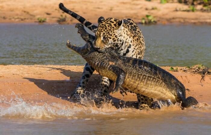 5 вещей, которые крокодилы делать не умеют и вряд ли научатся Источник: https://novate.ru/blogs/140921/60538/